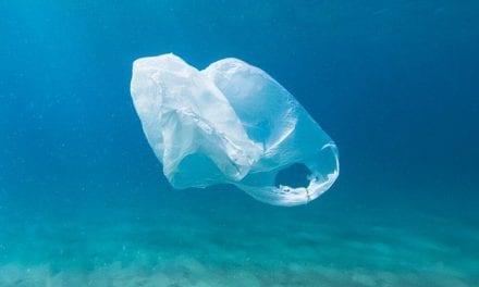 Limpieza de grandes cantidades de plástico en La Manga