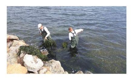 Avanza la limpieza de Mar Menor