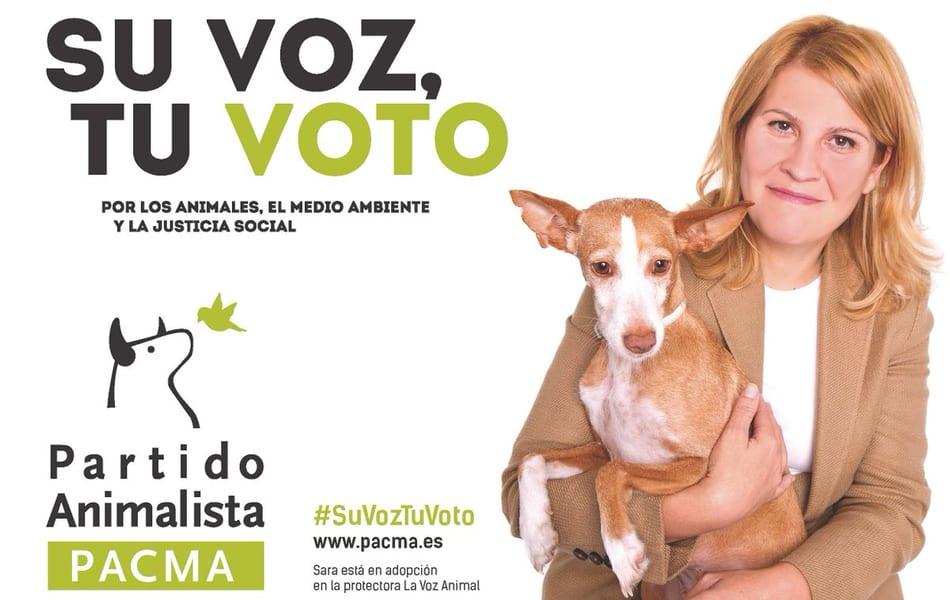 La protección de los animales en manos de los alcaldes de los pueblos