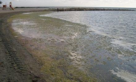El plan de limpieza de las playas de Los Urrutias y Los Nietos no acaba con las algas