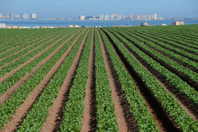 Los agricultores en la zona del Mar Menor rechazan el cierre de los pozos