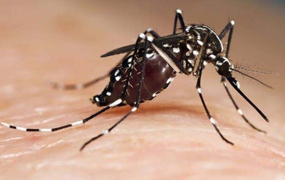 Las lluvias combinadas con las altas temperaturas disparan las plagas de mosquitos