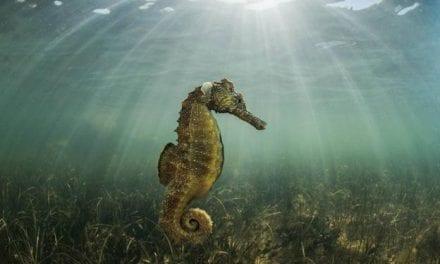 Un nuevo libro; El Mar Menor. Una laguna mágica
