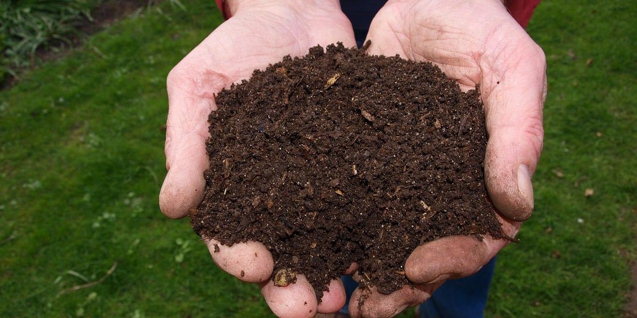 Se ensayan nuevas variedades ecológicas y de abono en el centro agrario de San Javier
