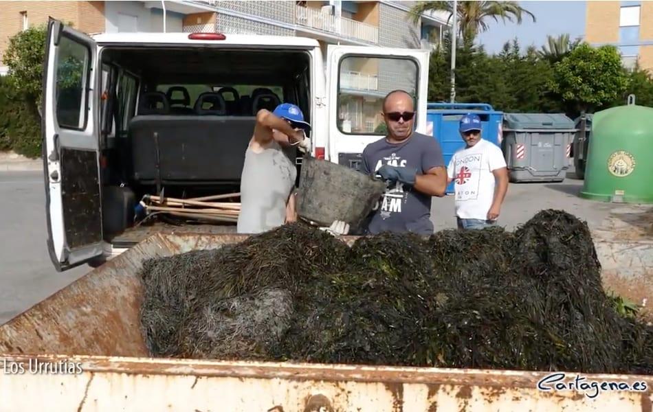 Ayuntamiento de Cartagena intensifica la limpieza de las playas en el Mar Menor 2019