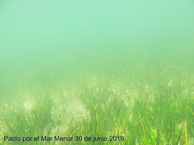 ¿Qué avances ha dado la colaboración con la UPCT y Coag para mejorar la calidad del agua del Mar Menor?