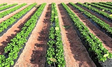 Una solución eificaz para recuperar la fertilidad de los suelos difíciles con el humus