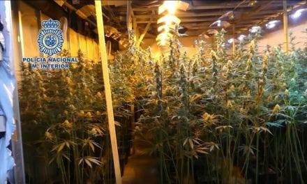 12 miembros de una red de ciudadanos vietnamitas que cultivaban marihuana en Albacete y Murcia