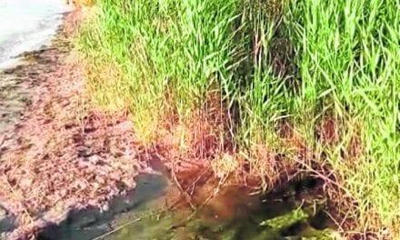 Precintan En Los Alcázares   la desalobradora que da riego al campo de golf  por supuestos vertidos a la laguna