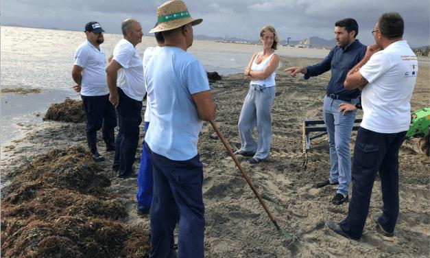 Las brigadas de limpieza del Mar Menor retiran 450 metros cúbicos de algas y residuos orgánicos de aguas de la laguna salada