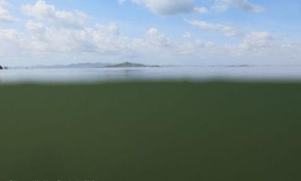 """La eutrofización en el Mar Menor no siempre parece una """"sopa verde"""""""