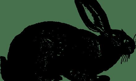 Si solo comes carne de conejo … mueres.
