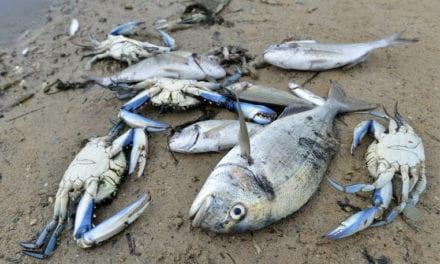 El Gobierno saca al Mar Menor de la Cumbre del Clima de Madrid