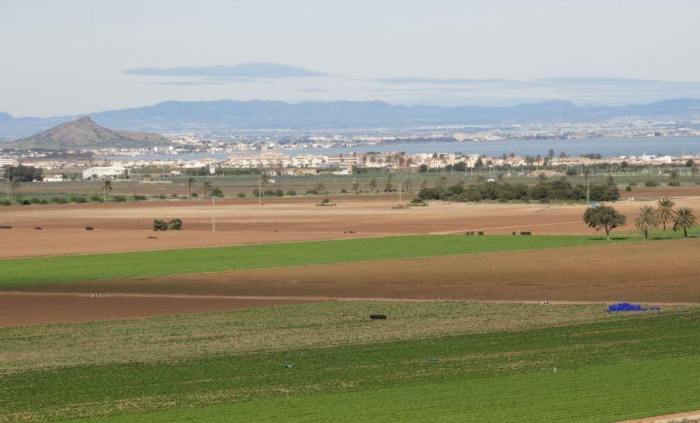 Cerca de  mil hectáreas de regadíos ilegales del entorno del Mar Menor volverán a ser de secano