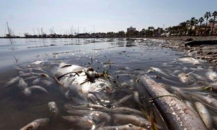 120 voluntarios de SOS Mar Menor retiran dos toneladas de basura