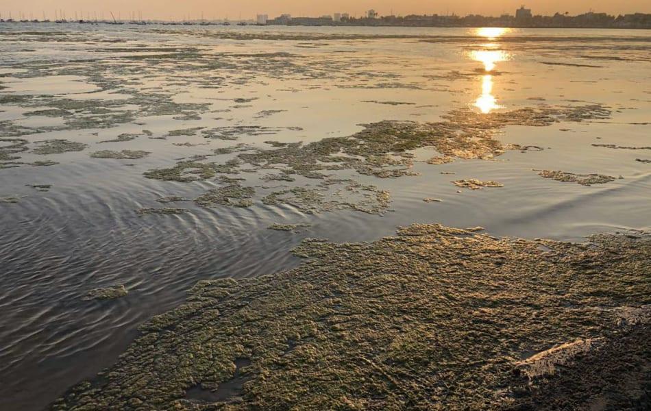 Pacto por el Mar Menor solicitará a la fiscalía el control de las aguas de Playa de Villananitos