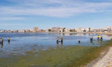 Retirado un manto de algas en el Mar Menor