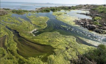Se investiga un posible vertido al Mar Menor en la zona del humedal de El Carmolí