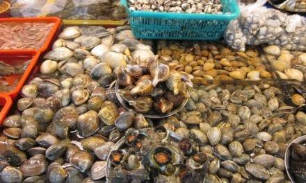 Se van a utilizar almejas y ostras para limpiar el agua del Mar Menor