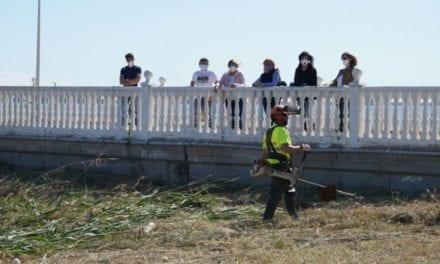 Se inicia la retirada de cañas en aguas de la playa de Los Nietos para evitar su contaminación