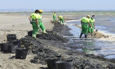Refuerzan la limpieza de playas del Mar Menor ante el enfado vecinal