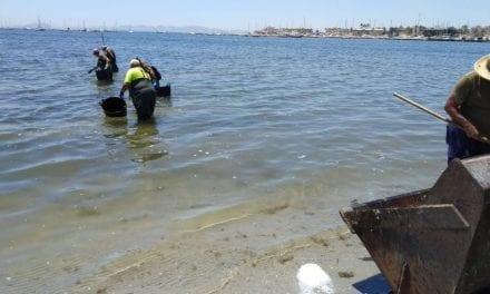 Ayuntamiento de San Pedro del Pinatar  y Comunidad refuerzan la retirada de algas y la limpieza en las playas del municipio