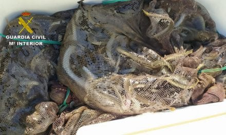 La Guardia Civil investiga a cuatro personas por pesca ilegal de 180 kilos de anguilas en el Mar Menor