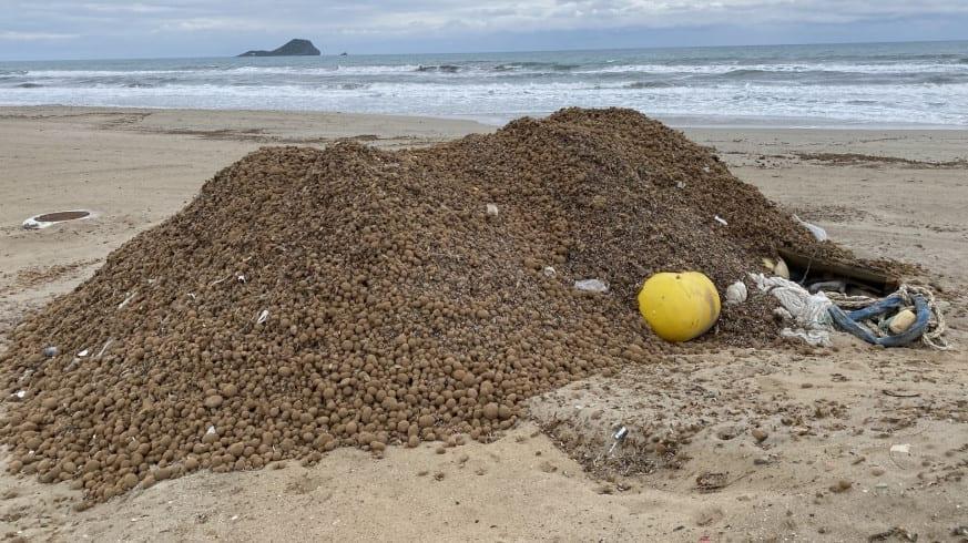 Denuncian la retirada de arribazones de posidonia de las playas de La Manga del Mar Menor