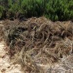 Investigado un agricultor de San Javier por extracción de aguas subterráneas